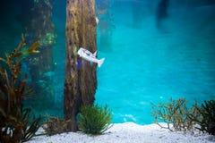 Fish swimming in a tank Stock Photo