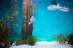 Fish swimming in a tank Stock Photography