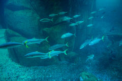 Fish swimming in tank Stock Photo