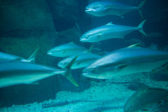 Fish swimming in tank Stock Image