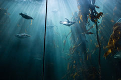 Fish swimming in a tank Stock Image