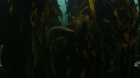 Fish swimming in a tank. At the aquarium stock footage
