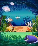 Fish swimming under the ocean Royalty Free Stock Photo