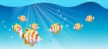 Fish swimming under the ocean. Illustration Royalty Free Stock Images