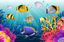 Free Fish Swimming Under The Sea Stock Photo - 75242670