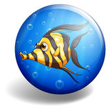 Fish swimming Royalty Free Stock Photos