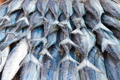 Fish Tail Stock Photos