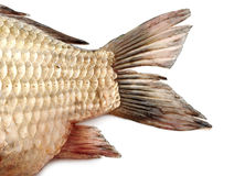 Fish tail,carp Royalty Free Stock Image