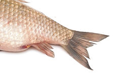 Fish tail. Isolated on white background Royalty Free Stock Image