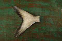 Fish tail. On old wooden background Stock Photography