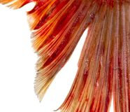 Fish tail on a white background. Photos in the studio Royalty Free Stock Photo