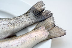 Fish Tails on a White Plate Stock Photography