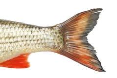 Fish tale Royalty Free Stock Photos