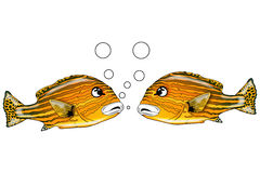 Fish talk 3. Two fishes talking together face to face Royalty Free Stock Photo