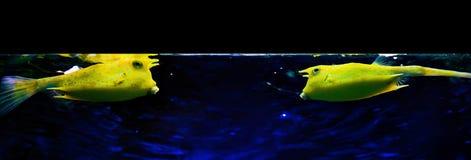Fish talk Stock Photo