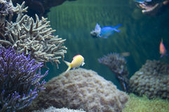 Fish Tank. With a Variety of Marine Life at Aquarium in Boston, Massachusetts stock images