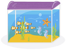 Fish tank. On the white background Stock Photography