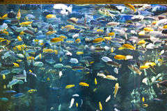 Fish Tank. With many spieces stock photos
