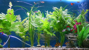 Tropical fish tank aquarium. With plants and bubbles stock video footage