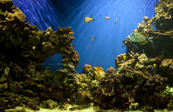 Fish tank aquarium Royalty Free Stock Image