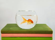 Fish tank on the books Stock Images