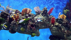 Fish tank  with colorful fish, living corals stock footage
