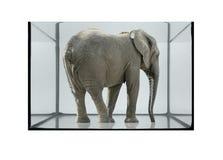 Fish tank and elephant Stock Image