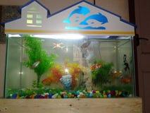 Fish tank Stock Photography