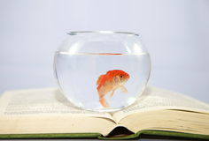 Fish tank on open book Royalty Free Stock Image