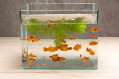 Fish tank on table wooden. Room stock photography