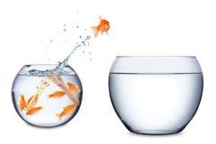 Fish teamwork concept royalty free stock image