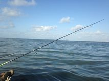 Fish Texas. Fishing coast ocean Royalty Free Stock Photos