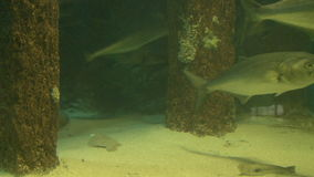 Fish in their natural habitat stock video footage