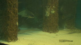 Fish in their natural habitat stock footage