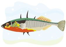 Fish three spine stickleback Royalty Free Stock Images