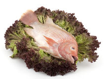 Fish Tilapia on salad Stock Image