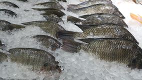 Fish. Tilapka fish fresh cook several Stock Images