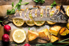 Fish time Royalty Free Stock Photography