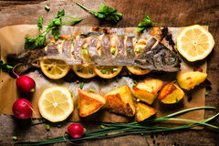 Fish time Stock Image