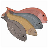 Fish to eat - trout, seabass Stock Photo
