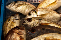 Fish to sell Stock Photography