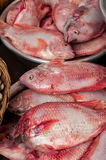 Fish at traditional asian seafood marketplace. Raw fresh seafood, fish and clams for sale at asian food market Royalty Free Stock Photos