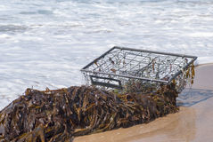 Fish Trap. A fish trap entangled in kelp washes ashore on the beach Stock Images