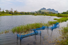 Fish trap Pond Nature Stock Photo