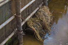 Fish trap in rice paddies. Food thailand Royalty Free Stock Photography