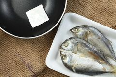 Fish in tray scene. The short bodied mackerel fish put on the food grade foam tray among sack background in the scene appear the pan also represent the fish and Royalty Free Stock Images
