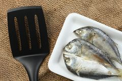 Fish in tray scene. The short bodied mackerel fish put on the food grade foam tray among sack background in the scene appear the pan also represent the fish and Royalty Free Stock Image