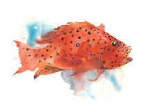Fish tropical bright color polka dot sea creature watercolor painting illustration isolated on white background. Fish tropical bright color polka dot sea Royalty Free Stock Photos
