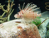 Fish. Tropical Fish in deep calm water Royalty Free Stock Photos