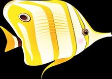 Fish, Tropical Fish, Sea Royalty Free Stock Photo